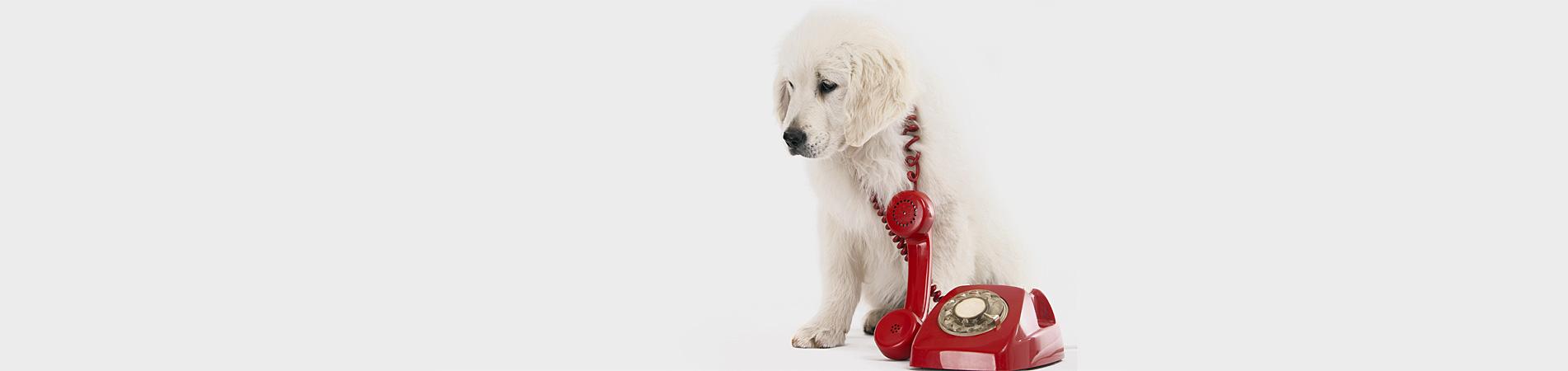 Contact Positive Response Dog Training