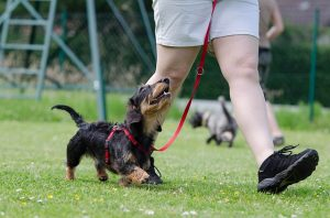 "3 Common ""Excuses"" for Avoiding Dog Training Classes"