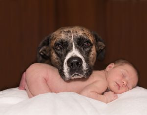"12 Steps to safely introduce a new Baby to the ""Fur-Family"""