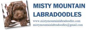 Misty Mountain Labradoodles